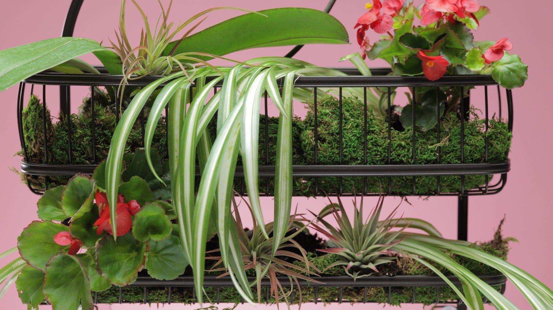 Wachsen Sie Pflanzen in Ihrer Dusche für ein Spa-ähnliches Erlebnis jeden Tag!#dusche #ein #erlebnis #für #ihrer #jeden #pflanzen #sie #spaähnliches #tag #wachsen
