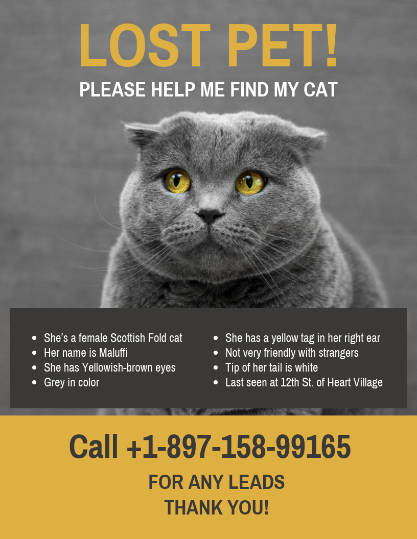 Yellow Black Missing Cat Poster Template In 2020 Missing Cat Poster Poster Template Cat Posters