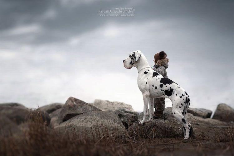 _bambini-piccoli-cani-grandi__017