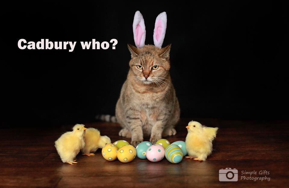 Sadie the cat, as the Cadbury Easter bunny | My personal ...