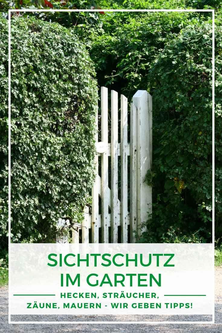 Sichtschutz im Garten Hecken und Sträucher Sichtschutz