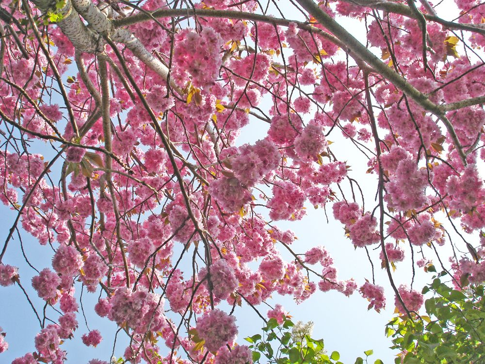 Sitting under the cherry tree at the bottom of the garden.