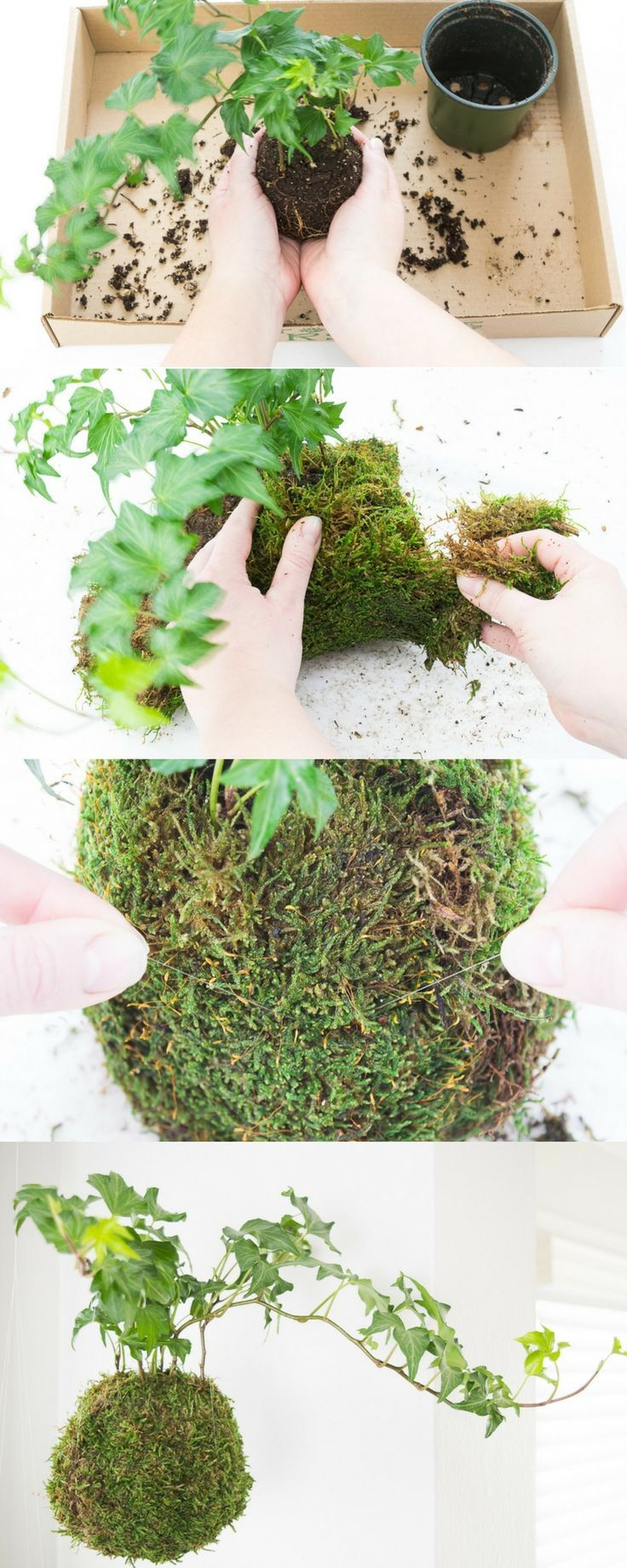This tutorial shows you the easiest way to make your own kokedama! These moss balls are perfect for adding a little greenery to your window without a bunch of pots cluttering up the windowsill.