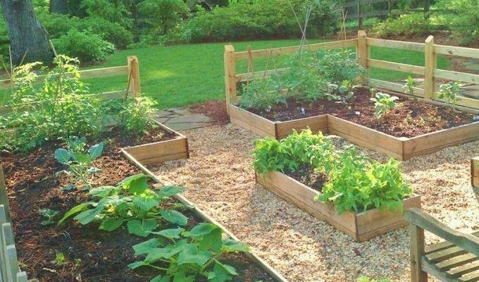 Start your family vegetable garden | Backyard vegetable ...
