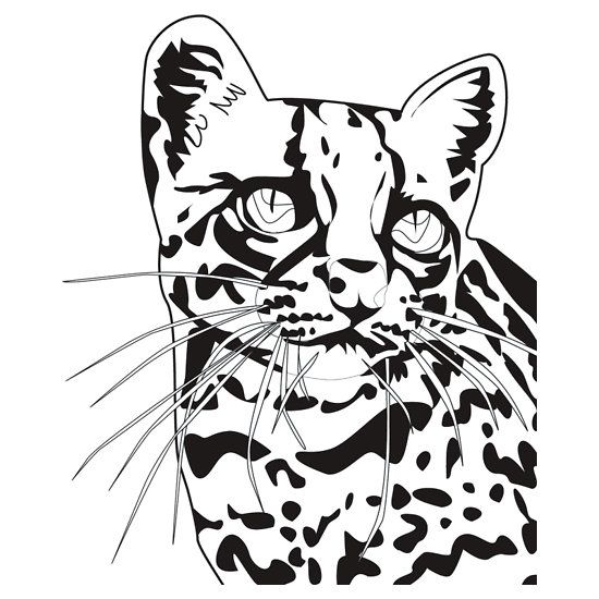 The Elusive Ocelot No Background T Shirt By Crickmonster Cat