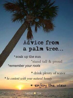 Stand Tall Lone Palm Love The Ocean Beach Ocean Quotes To Live By