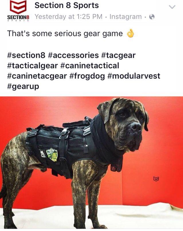 Frog Dog Mkt Vest V3 0 On A Mastiff Interesting Frogdog