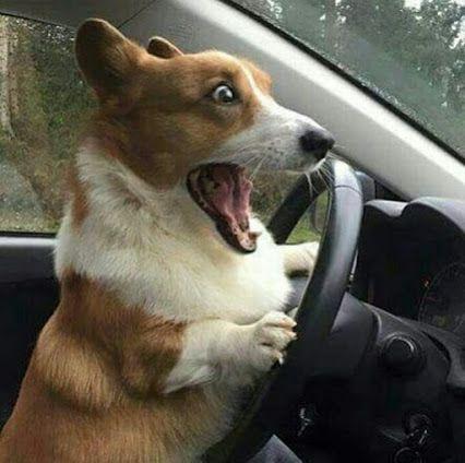 """""""Aaah, jag höll nästan på att köra över grannens katt. Men katten klarade sig. (Fasiken också, bättre tur imorgon)."""""""