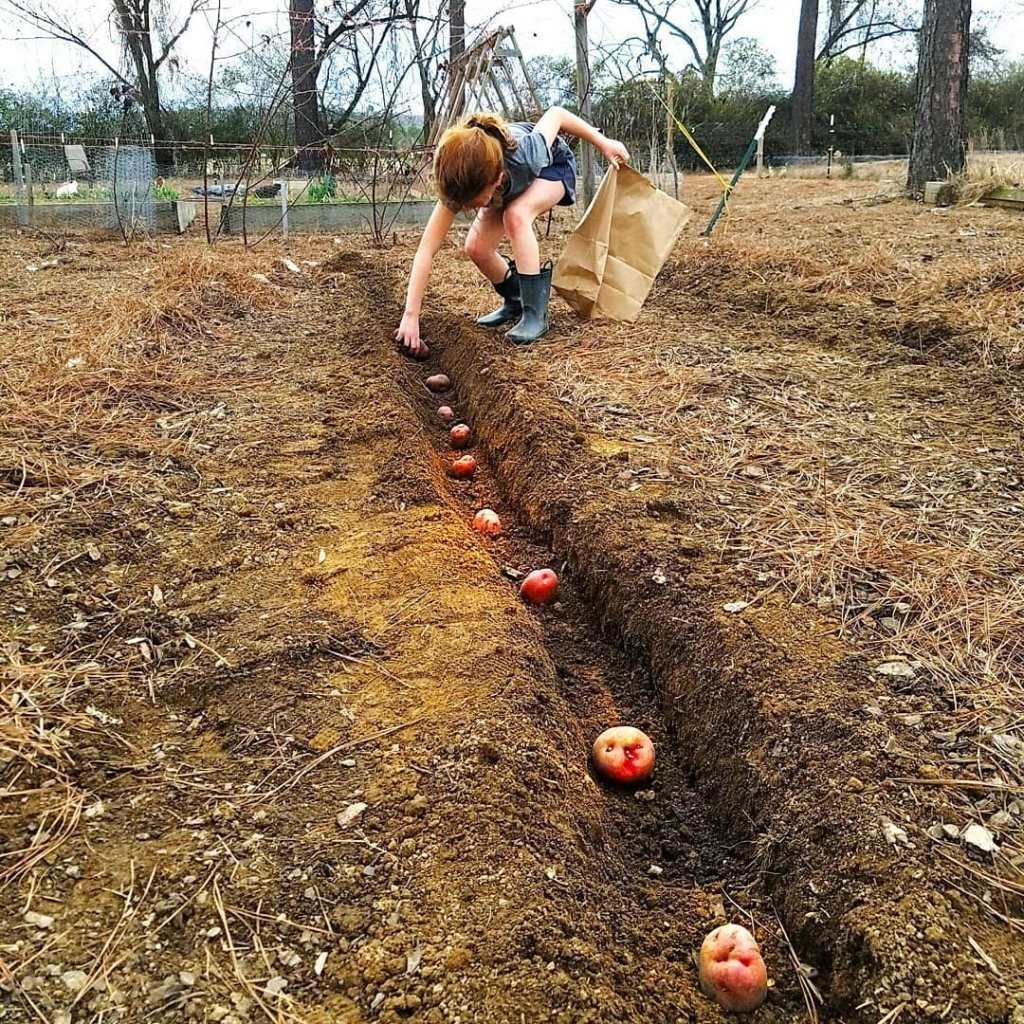 Urban Vegetable Gardening For Beginners: 7 Common Mistakes In Raised Bed Gardening (With Images