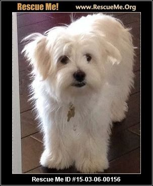 Animal Id Pickle Pants Rescuewolfgang Male Maltese Mix Age