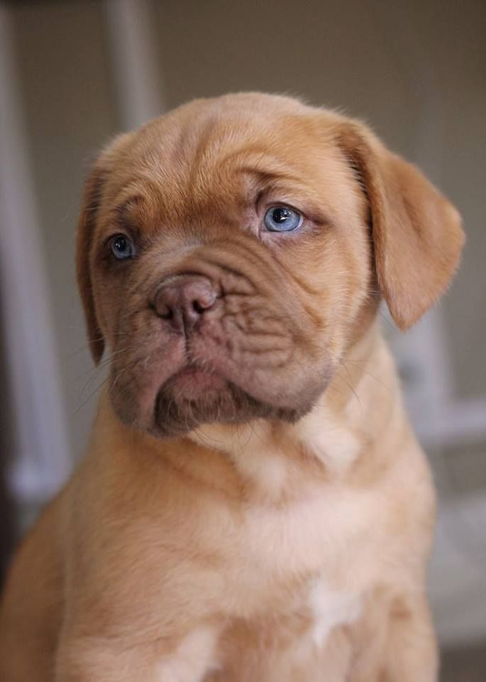 Pin by Hannah Carroll on too cute Puppies, Cute animals