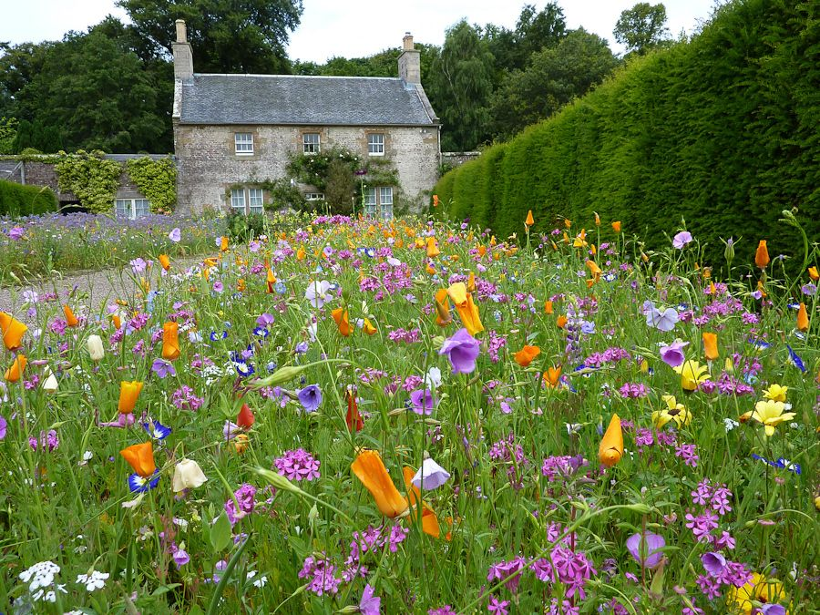 culzean garden scotland wild flowers garden nature pinterest wildblumen garten. Black Bedroom Furniture Sets. Home Design Ideas