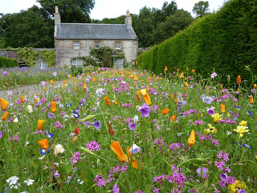 Culzean garden scotland flowers butterflies and for Garden design ideas scotland
