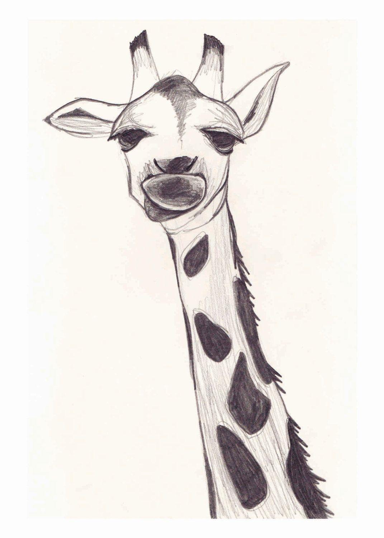 Giraffe doodle giraffe doodle art sketches giraffe pencil