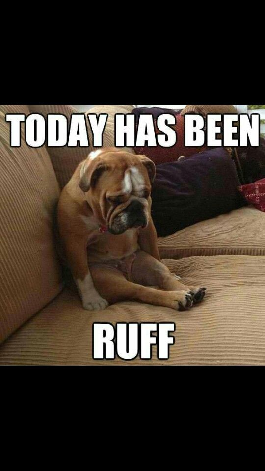 Dog ruff day meme | Animal Memes | Funny dog pictures, Dog quotes