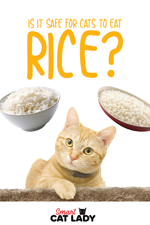 Is It Safe For Cats To Eat Rice Cat Care Tips Cat Diet Cats