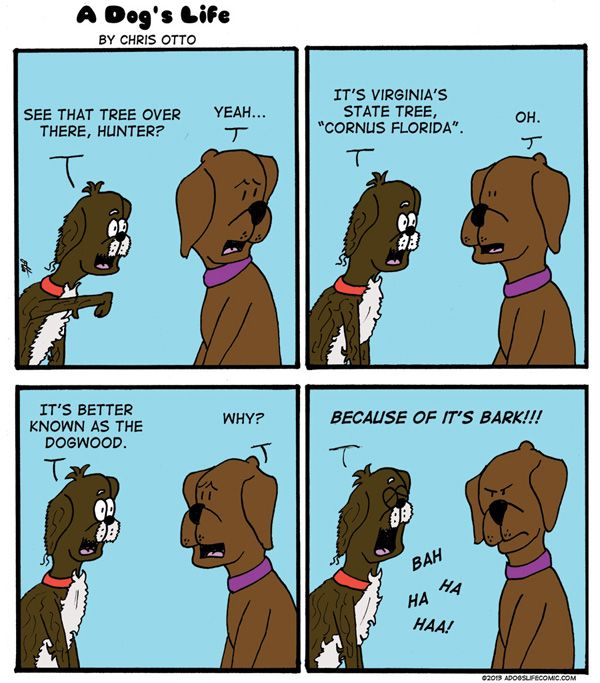 Dog Standing With Paws On Table Cartoons Google Search Cat