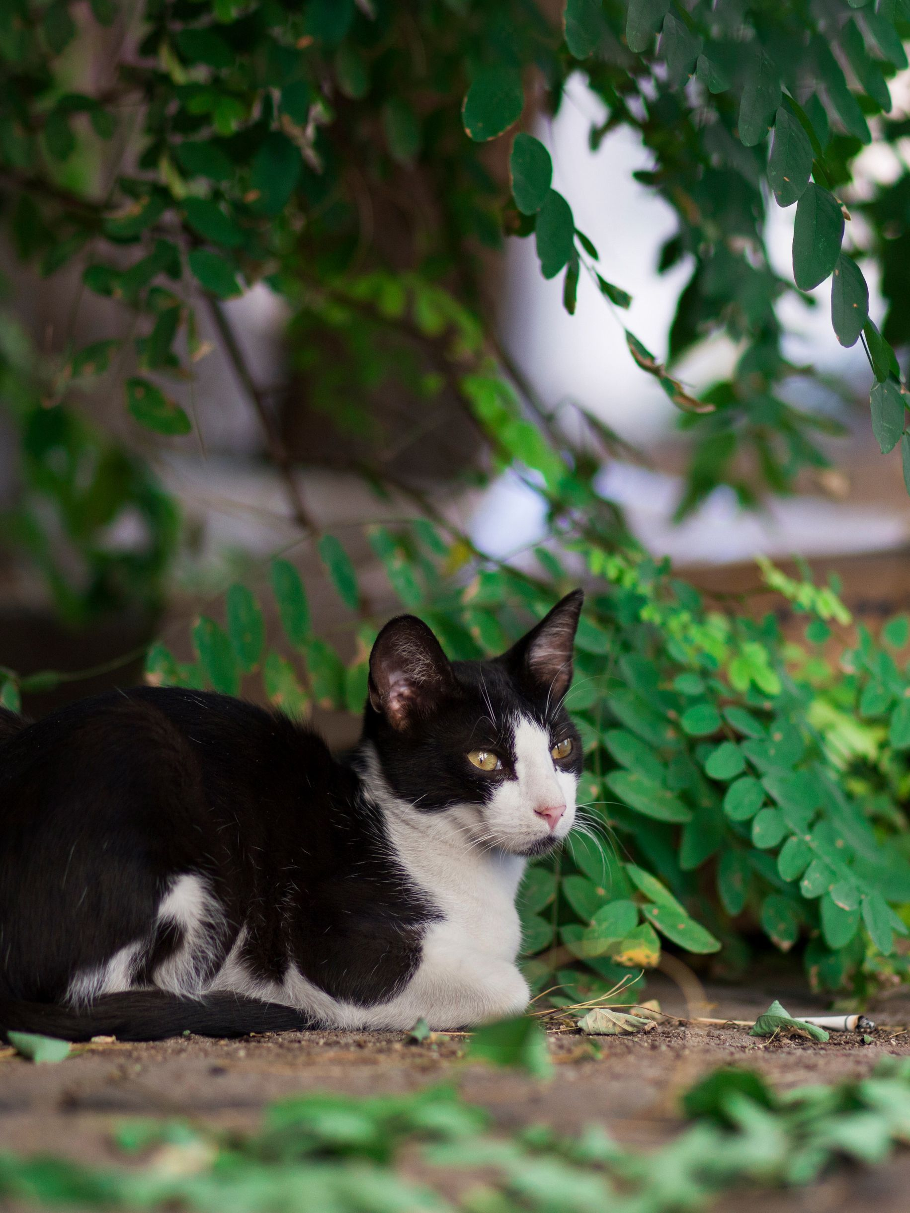 30 Pics Stray Cat Photos December New Collection Of Cats Photos In Istanbul Part 2 Gatos Animales