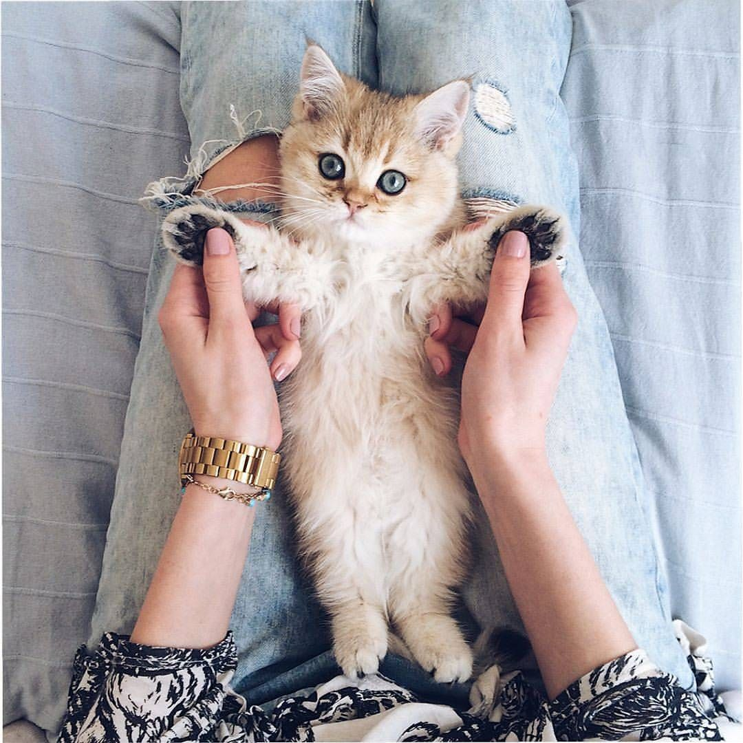 Catsbunker On Bild Gram Posts Videos Stories Bildgram Cats Kittens Adorable Tag A Friend By A Baby Animal Videos Funny Cat Images Kitten Pictures