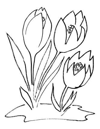 Crocus Flower Coloring Page Malvorlagen Blumen Malvorlagen