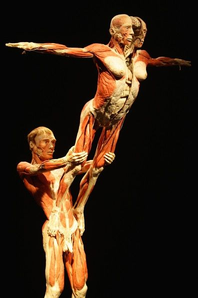 The Human Body Exhibition in Prague