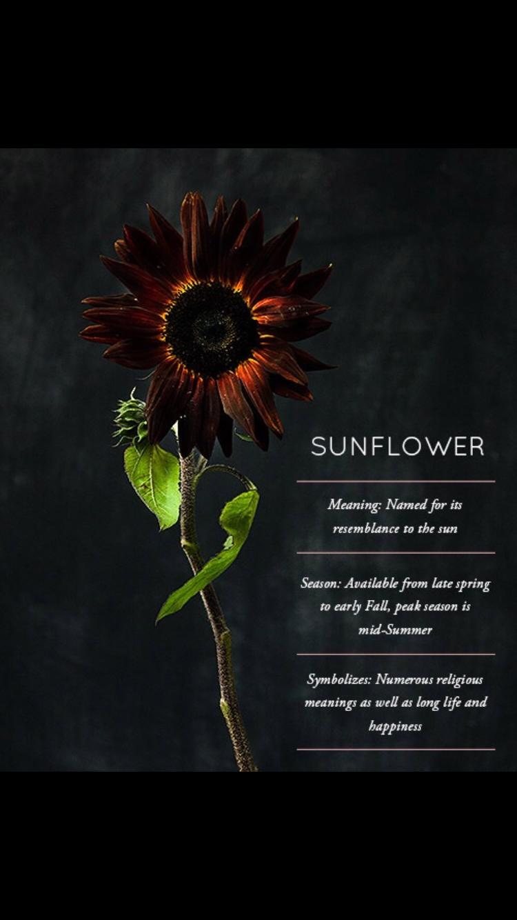 Pin by Ryn on Plants Flower meanings, Sunflower