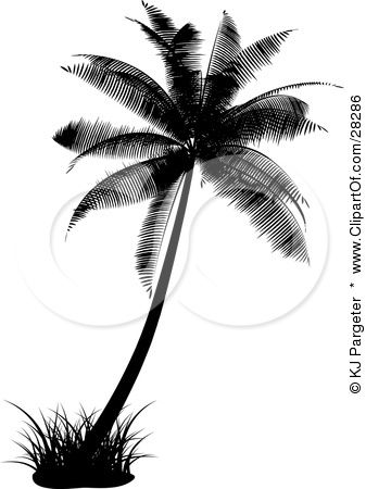 Black Silhouetted Palm Tree With A Tuft Of Grass by KJ Pargeter