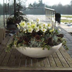 zauberhafte christrose winter bepflanzungen f r balkon. Black Bedroom Furniture Sets. Home Design Ideas