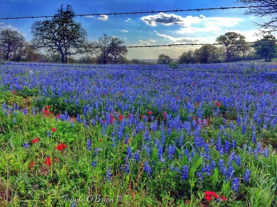 1f473078e9d72b4001963f697ee9b272 - Hill Country Gardens New Braunfels Tx Facebook