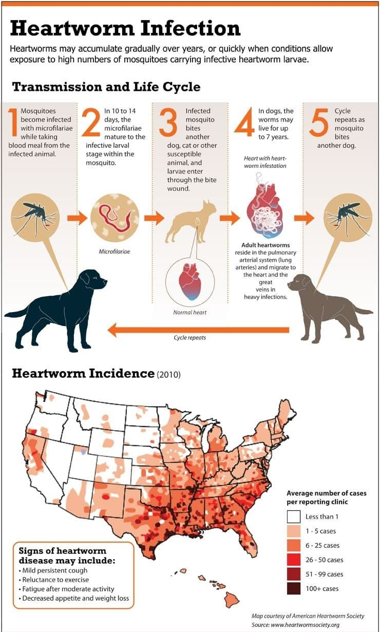 Fast Breathing in Dogs Why Dog Breathing Fast and Hard