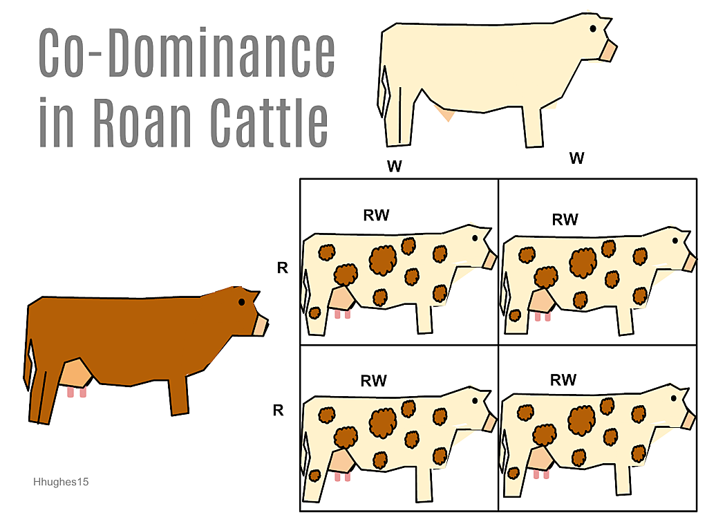 Incomplete Dominance Is An Intragenic Allelic Gene