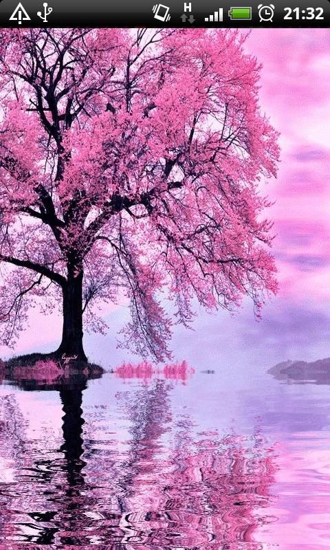 Cherry Tree Live Wallpaper Br Br Enjoy The Beautiful Serenity