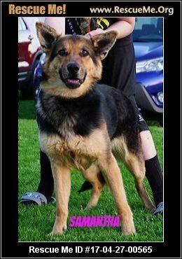Wisconsin German Shepherd Rescue Adoptions Rescueme Org