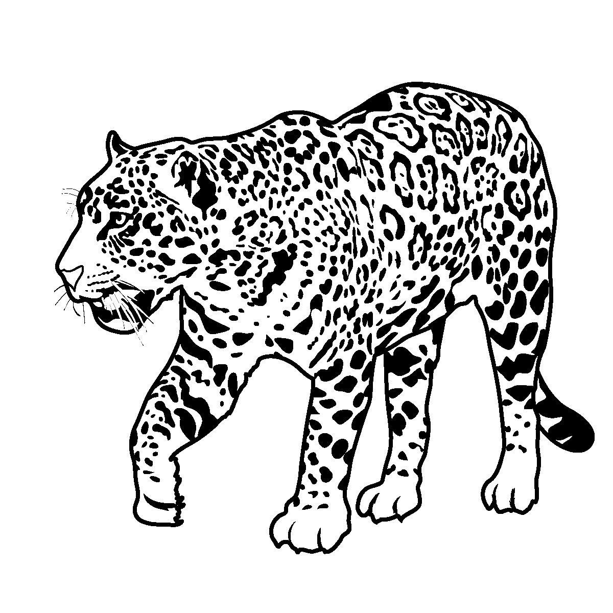 Printable Jaguar Coloring Pages   Rainforest animals ...