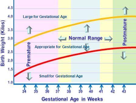 Garcinia cambogia diet schedule