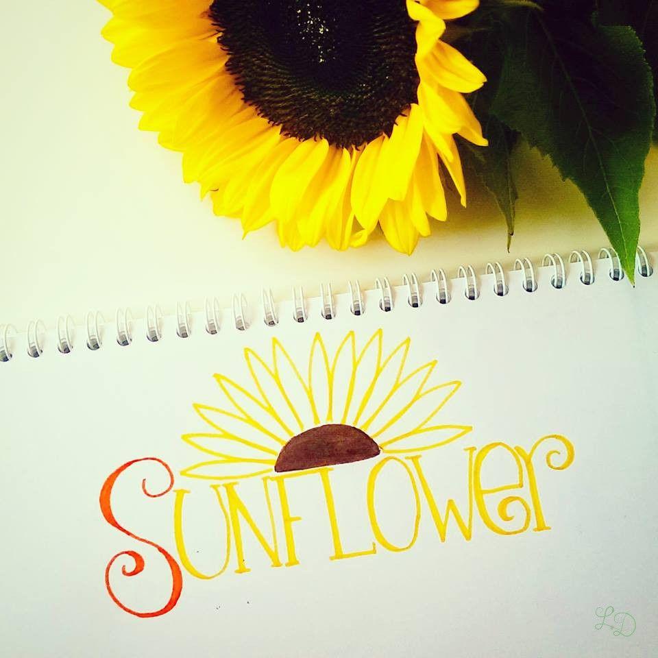 Sunflower Sonnenblume Met Afbeeldingen