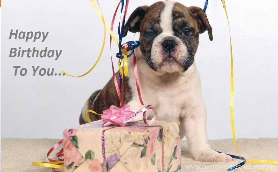 Happy Birthday Quotes Boxer Puppies Puppy Gifts Bulldog Wallpaper
