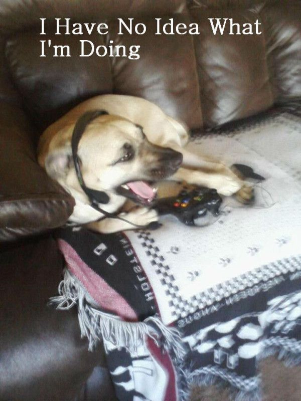 Do You Ever See A Dog Playing Video Game See This Funnydog Funnydogmemes Dogmemes Dog Memes Funny Dog Memes Dogs