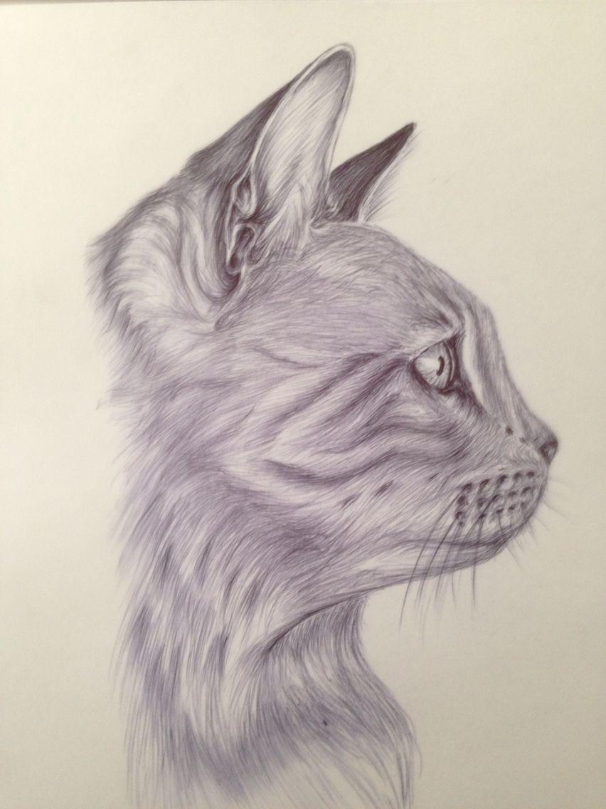 Disegno di gatto penna su carta cat draw disegni - Gatto disegno modello di gatto ...