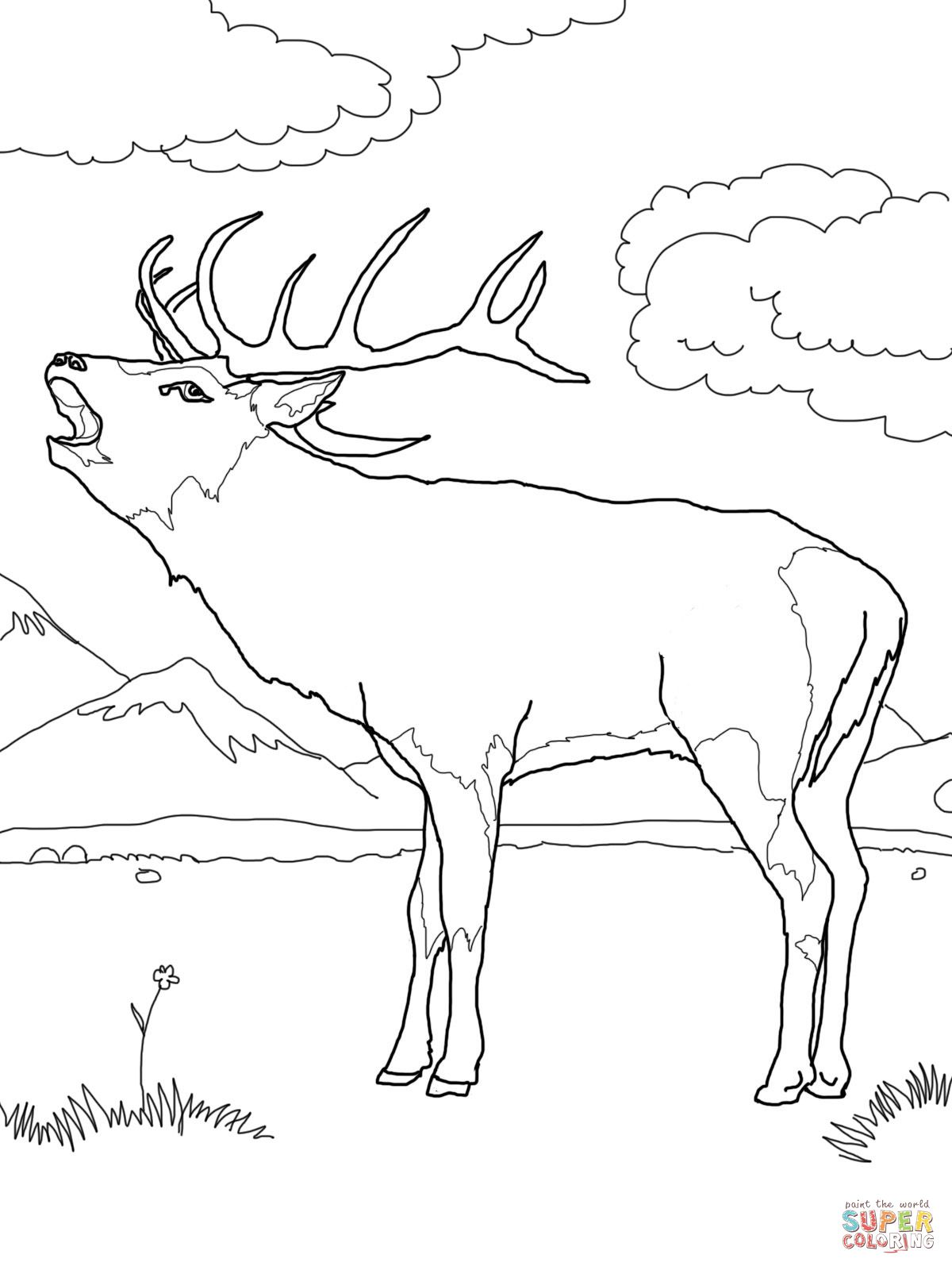 Western European Red Deer Coloring Page Supercoloring With