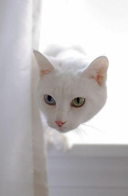 ANIMALES BLANCOS....❤