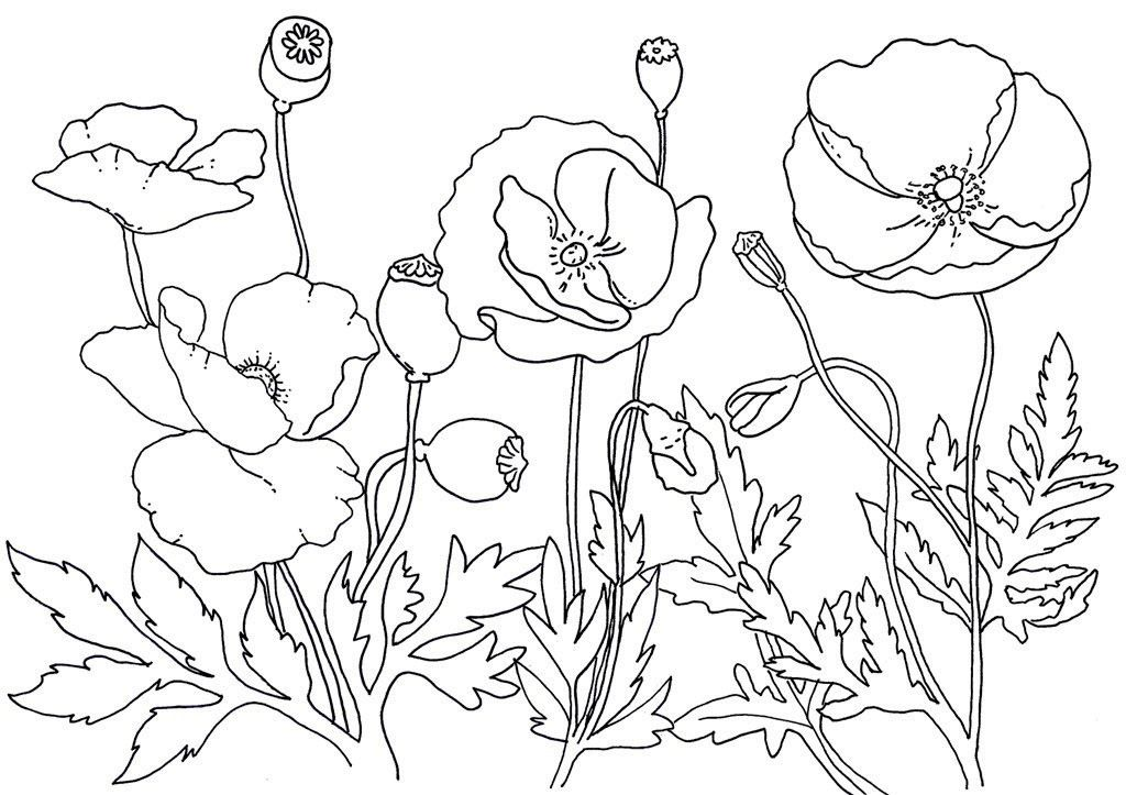 Remembrance Day Poppies Coloring Page Poppy Coloring Page