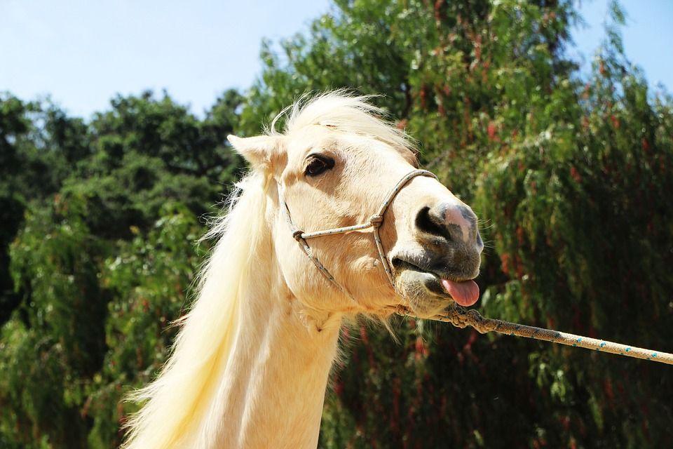 Photos / dessins de chevaux ou poneys rigolotes, drôles LOL, mdr (nouvelles photos )…