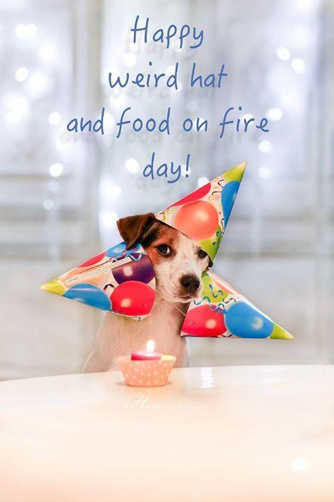 Jack Russell Birthday Card Jackrussell Birthday Card Hat