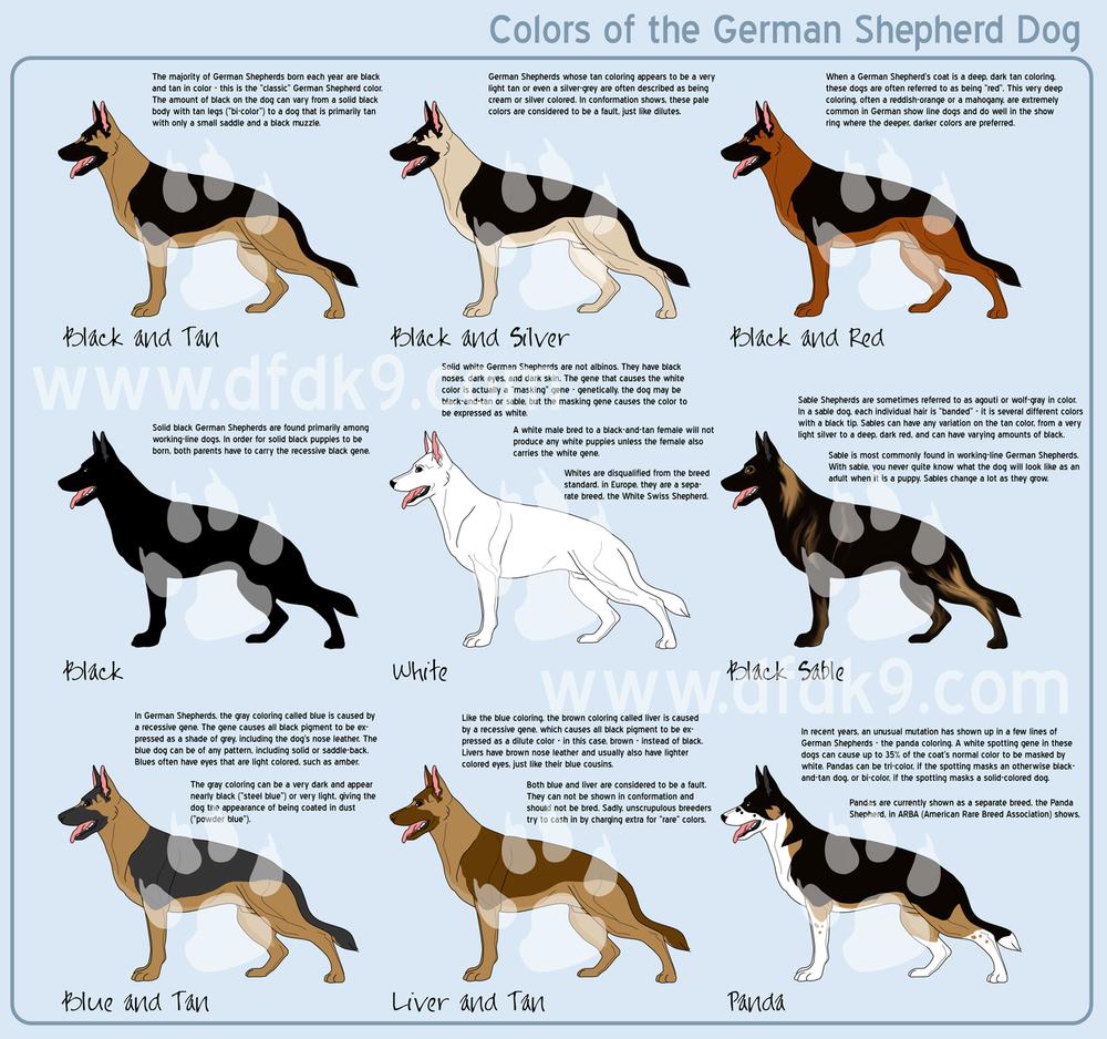Spragues German Shepherds California German Shepherd Dog Breeder
