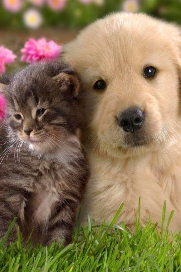 Pin By Mary Hopkins On Best Friends Fur Ever Cute Cats And Dogs Cute Animal Videos Kittens Cutest Baby