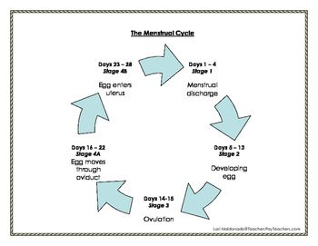 Human growth and development the menstrual cycle ccuart