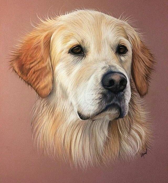 Malning Retratos De Perros Retratos De Mascotas Dibujos De Perros