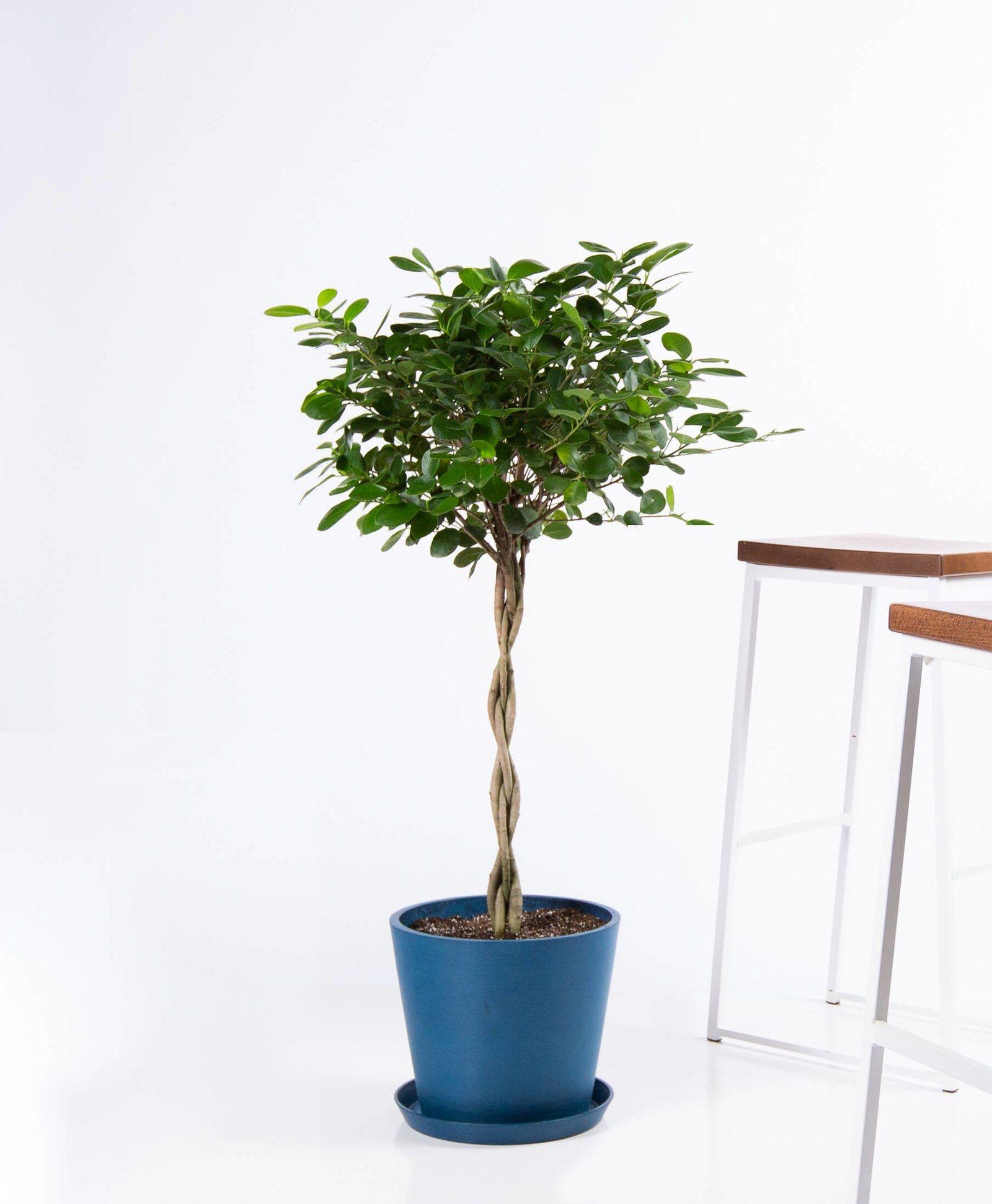How Indoor Plants Can Inspire Good Feng Shui In 2020 Indoor Plants Plants Best Indoor Plants