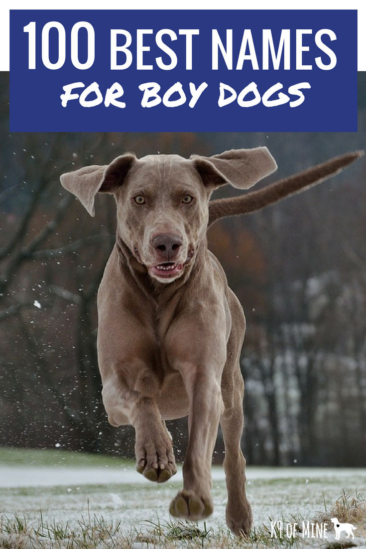 100 Best Male Dog Names The Most Popular Names For Boy Dogs Boy Dog Names Dog Names Dog Names Male
